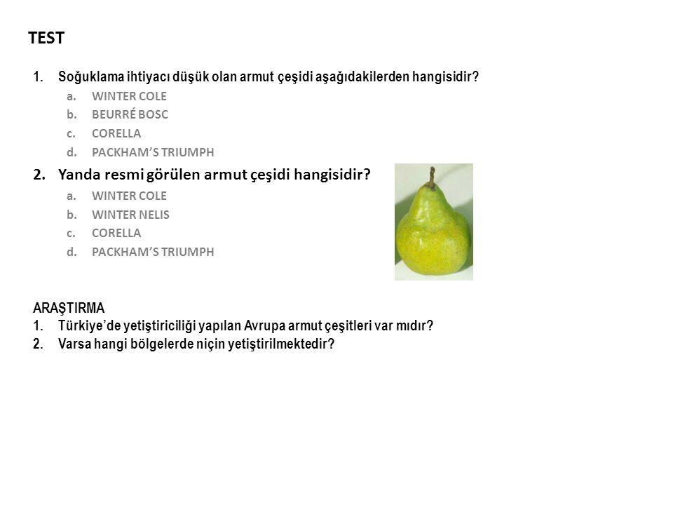 TEST Yanda resmi görülen armut çeşidi hangisidir