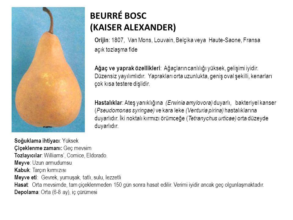 BEURRÉ BOSC (KAISER ALEXANDER)
