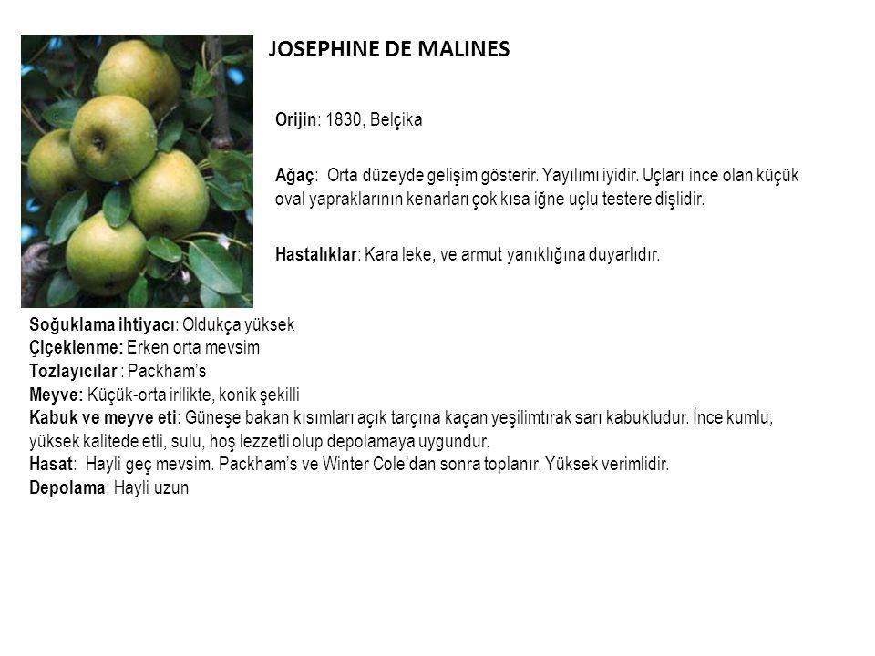 JOSEPHINE DE MALINES Orijin: 1830, Belçika