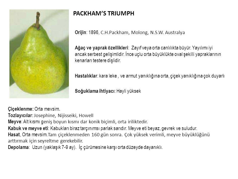 PACKHAM'S TRIUMPH Orijin: 1896, C.H.Packham, Molong, N.S.W. Australya