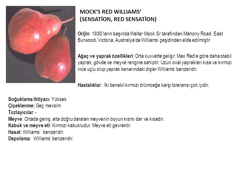 MOCK'S RED WILLIAMS' (SENSATİON, RED SENSATİON)