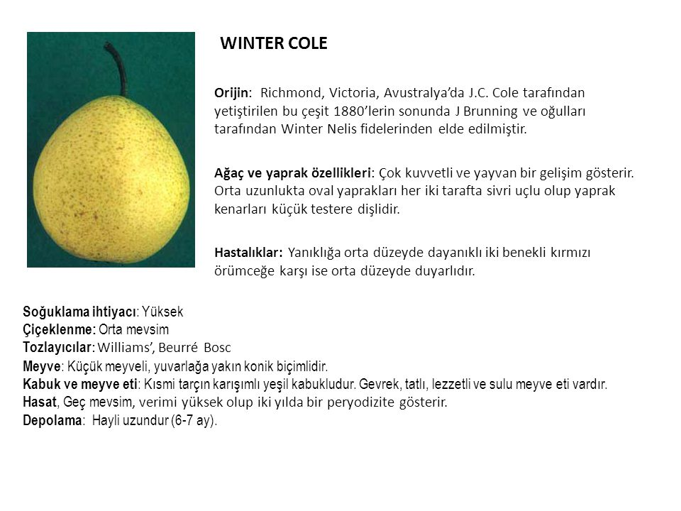 WINTER COLE