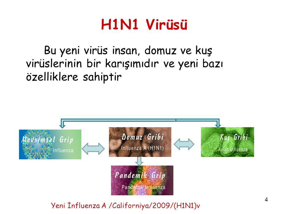 H1N1 Virüsü Bu yeni virüs insan, domuz ve kuş virüslerinin bir karışımıdır ve yeni bazı özelliklere sahiptir.