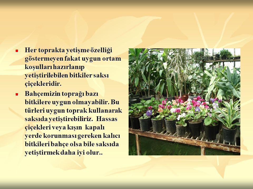 Her toprakta yetişme özelliği göstermeyen fakat uygun ortam koşulları hazırlanıp yetiştirilebilen bitkiler saksı çiçekleridir.