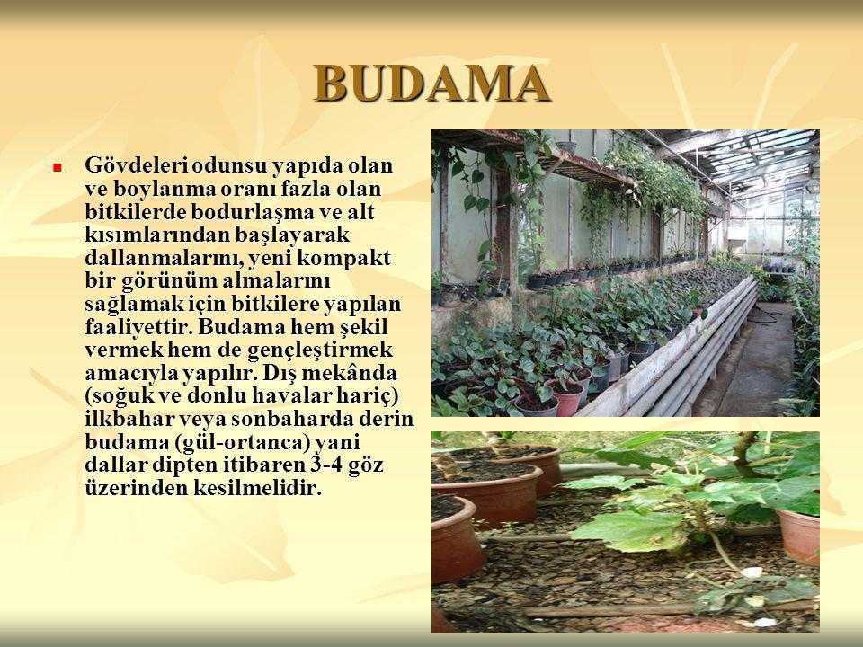 BUDAMA