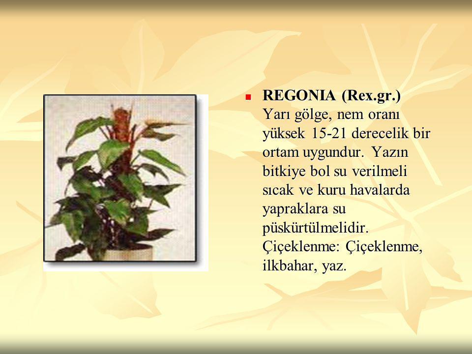 REGONIA (Rex.gr.) Yarı gölge, nem oranı yüksek 15-21 derecelik bir ortam uygundur.