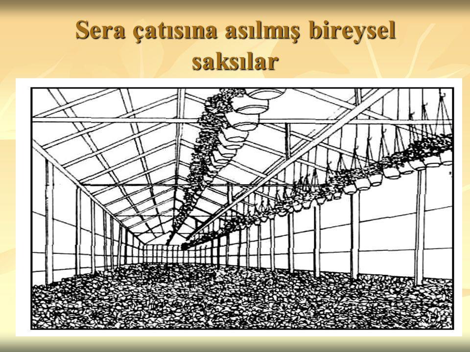 Sera çatısına asılmış bireysel saksılar