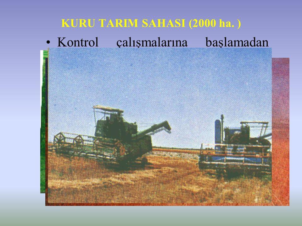 KURU TARIM SAHASI (2000 ha. )