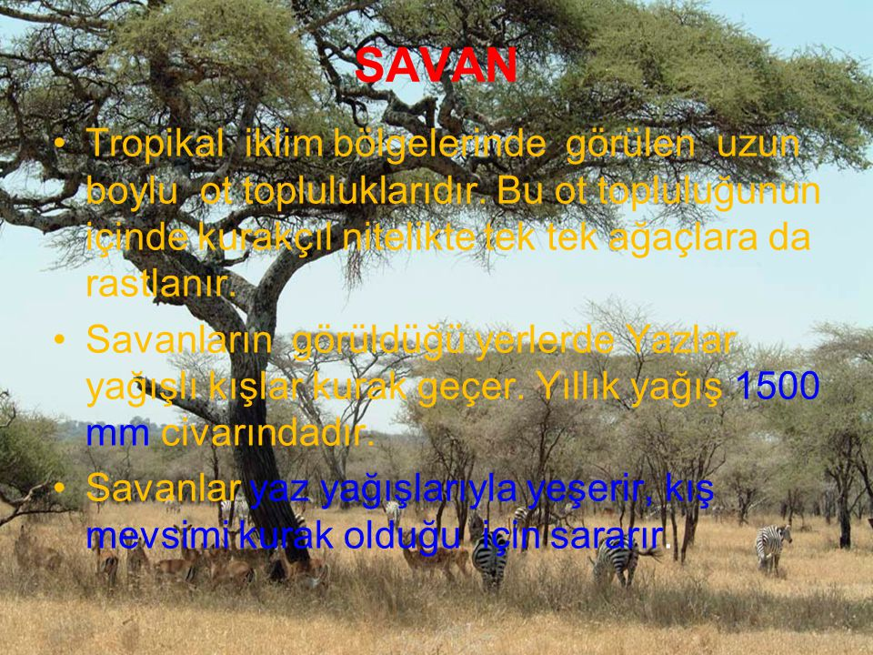 SAVAN