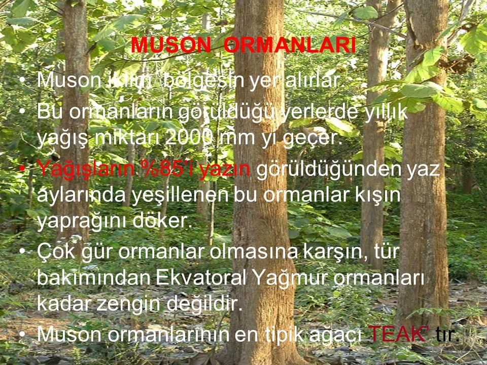 MUSON ORMANLARI Muson iklim bölgesin yer alırlar. Bu ormanların görüldüğü yerlerde yıllık yağış miktarı 2000 mm yi geçer.