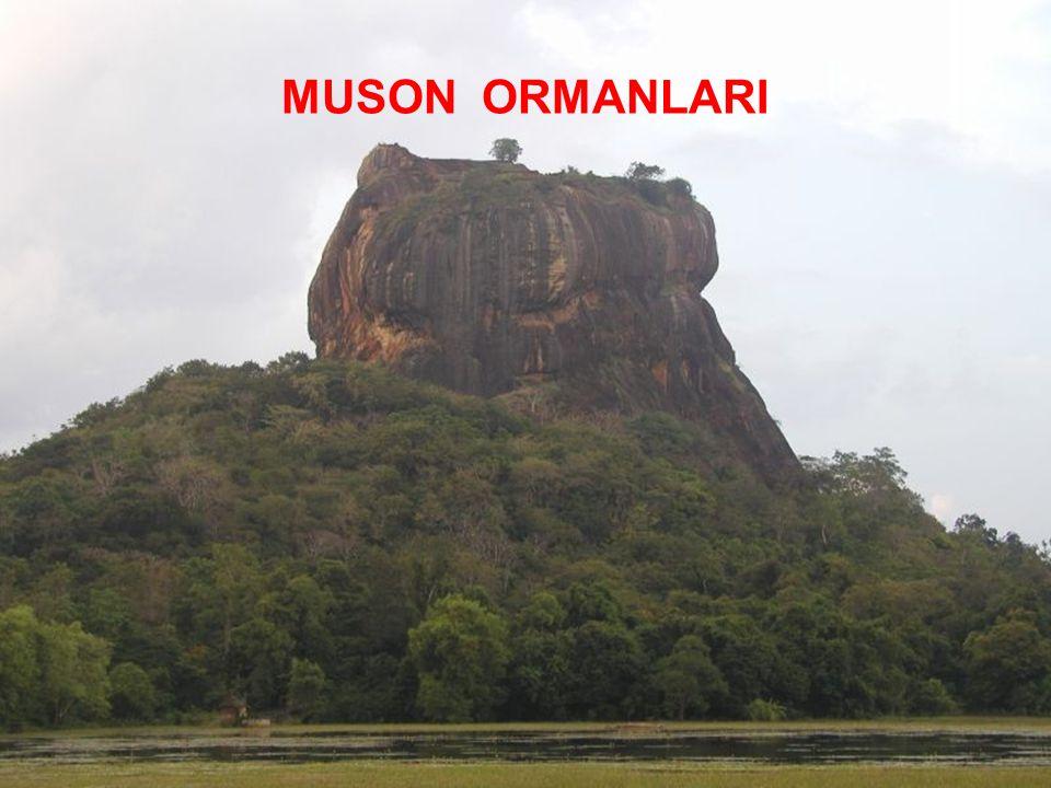 MUSON ORMANLARI