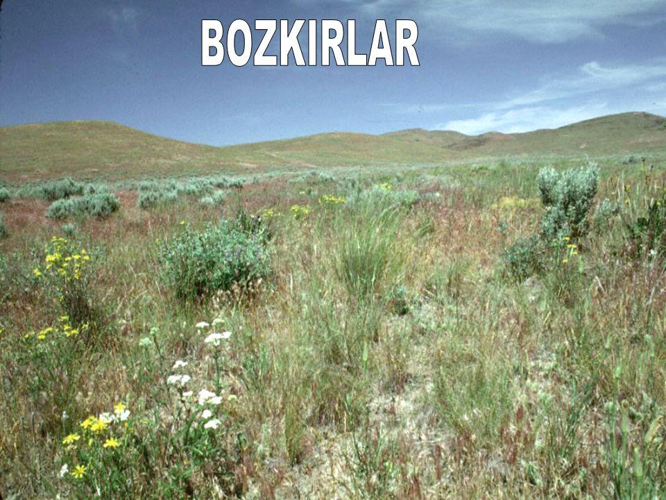 BOZKIRLAR