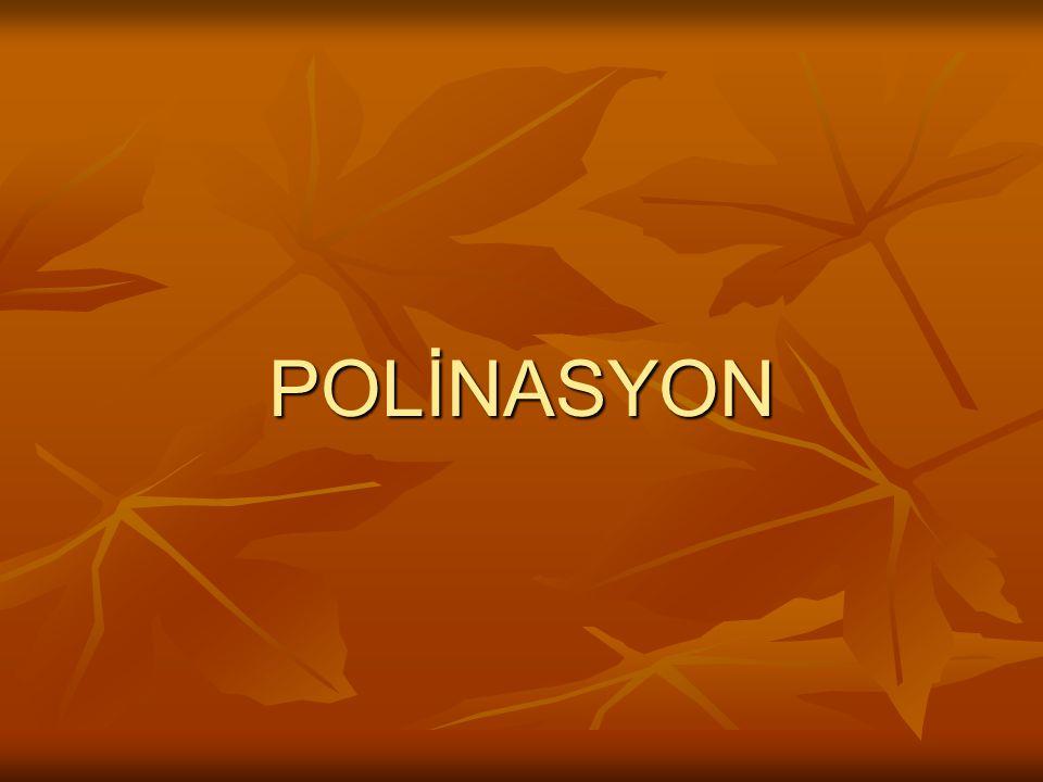POLİNASYON