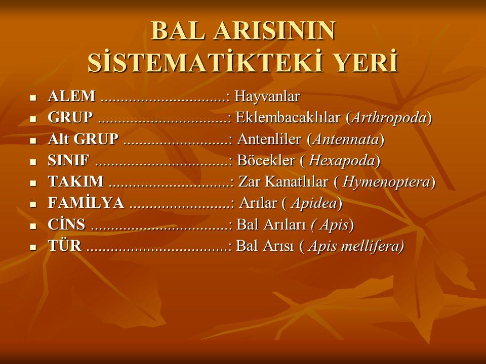 BAL ARISININ SİSTEMATİKTEKİ YERİ