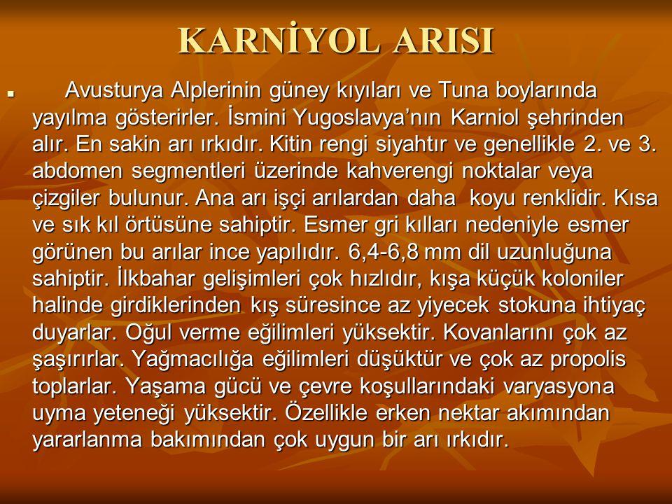 KARNİYOL ARISI