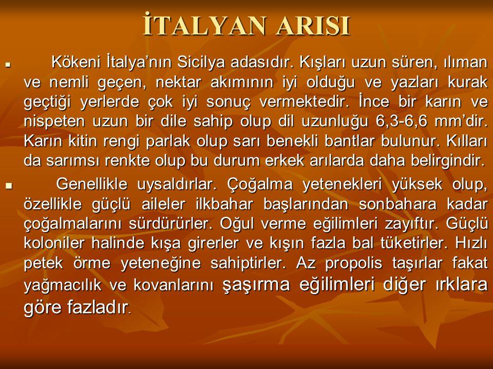 İTALYAN ARISI