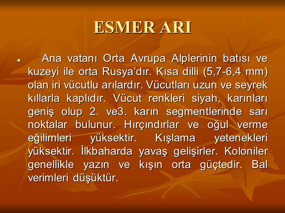 ESMER ARI