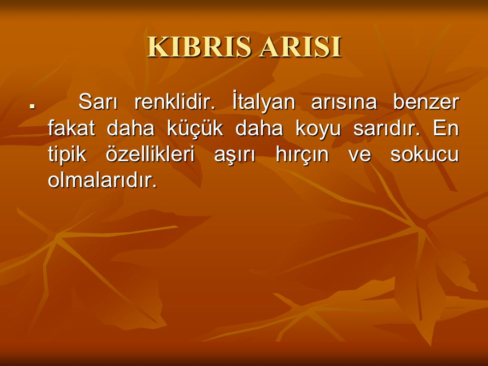KIBRIS ARISI Sarı renklidir. İtalyan arısına benzer fakat daha küçük daha koyu sarıdır.