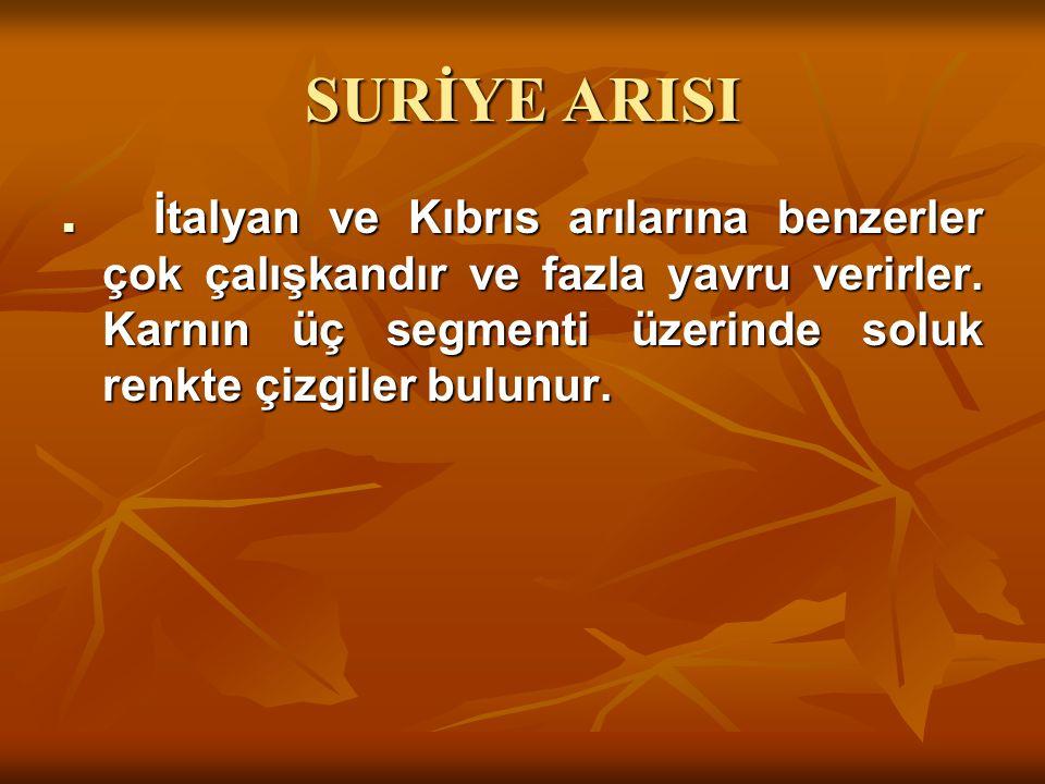 SURİYE ARISI