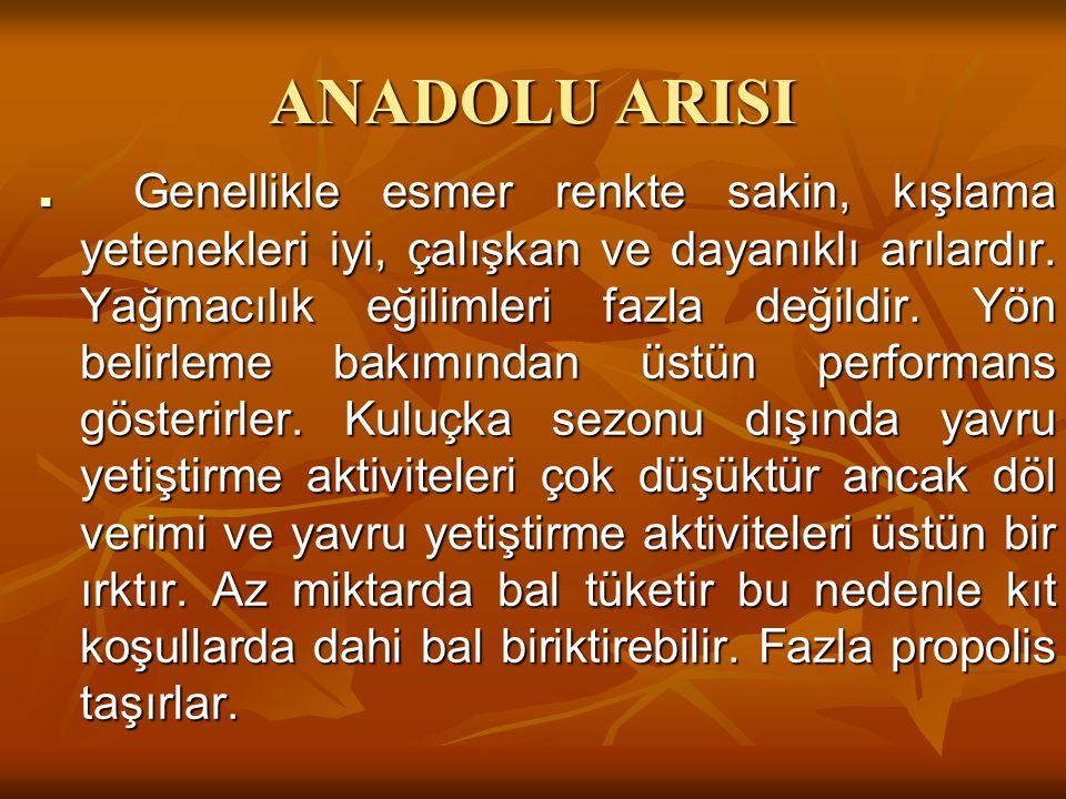 ANADOLU ARISI