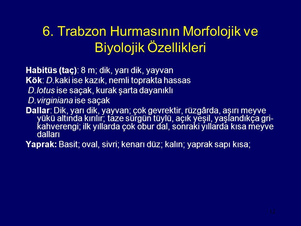 6. Trabzon Hurmasının Morfolojik ve Biyolojik Özellikleri