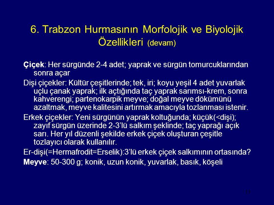 6. Trabzon Hurmasının Morfolojik ve Biyolojik Özellikleri (devam)