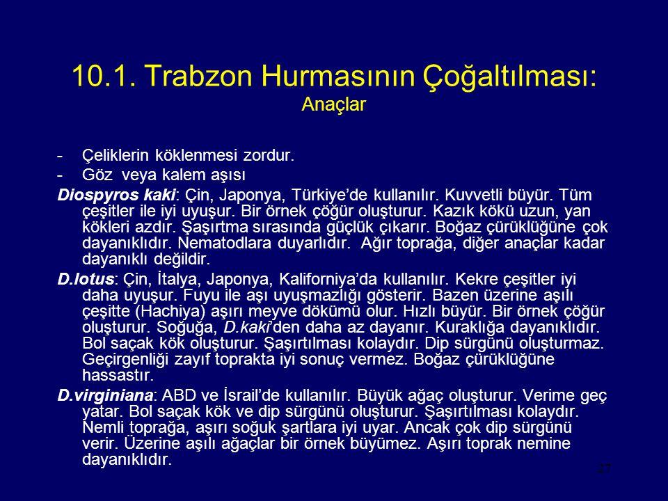10.1. Trabzon Hurmasının Çoğaltılması: Anaçlar