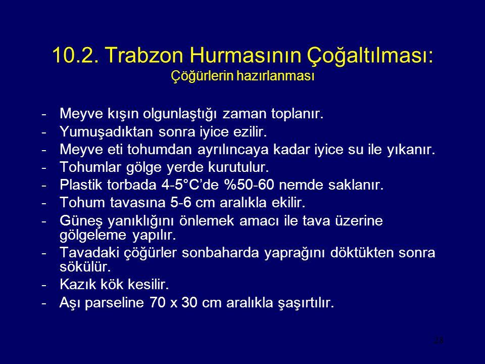 10.2. Trabzon Hurmasının Çoğaltılması: Çöğürlerin hazırlanması