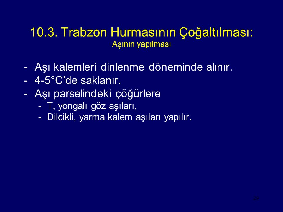 10.3. Trabzon Hurmasının Çoğaltılması: Aşının yapılması