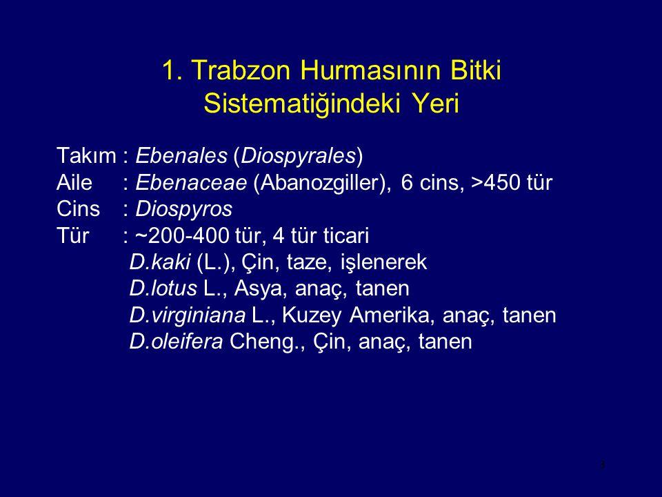 1. Trabzon Hurmasının Bitki Sistematiğindeki Yeri