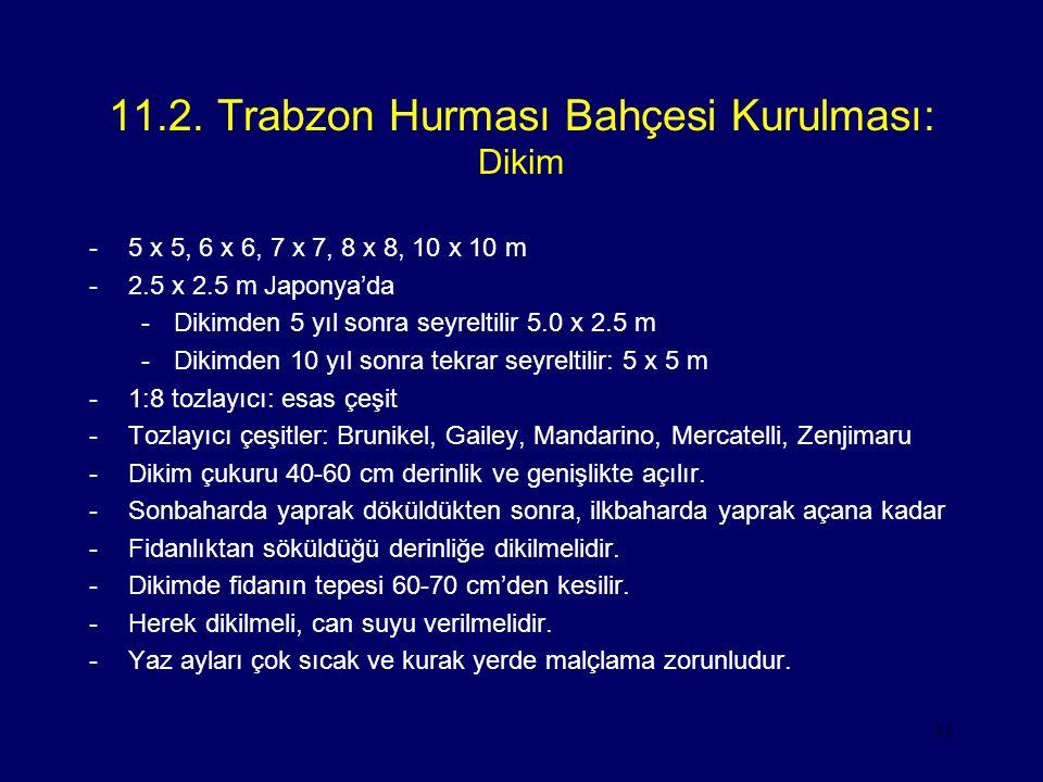 11.2. Trabzon Hurması Bahçesi Kurulması: Dikim