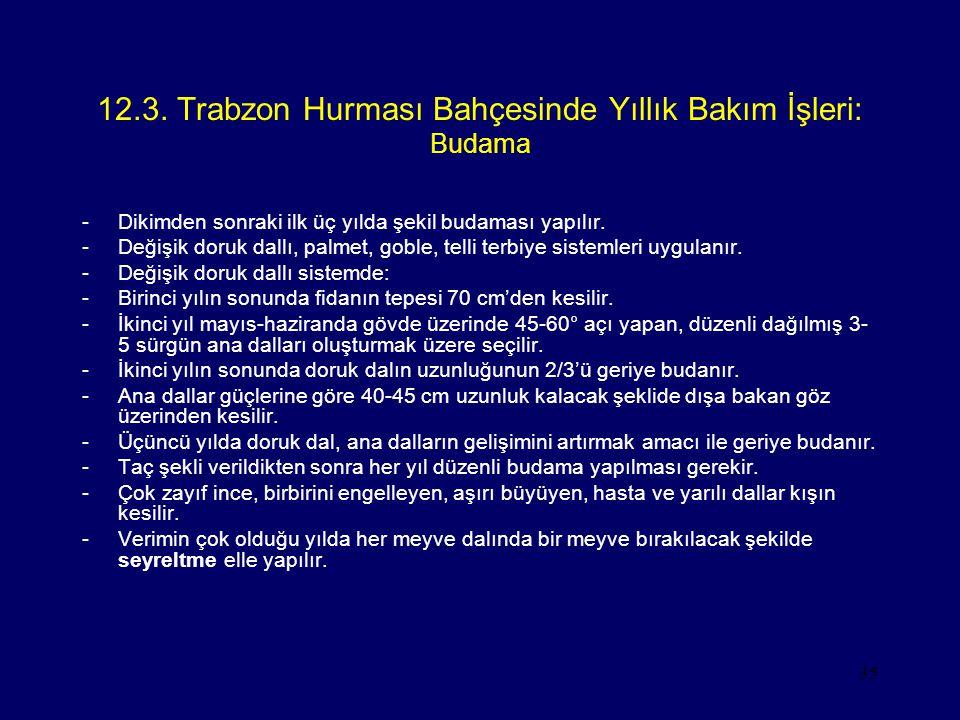 12.3. Trabzon Hurması Bahçesinde Yıllık Bakım İşleri: Budama