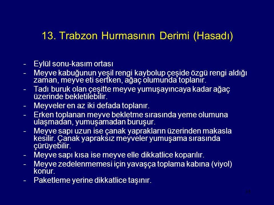 13. Trabzon Hurmasının Derimi (Hasadı)
