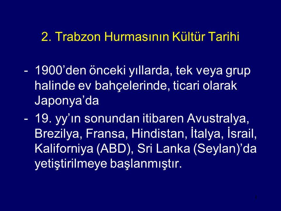 2. Trabzon Hurmasının Kültür Tarihi