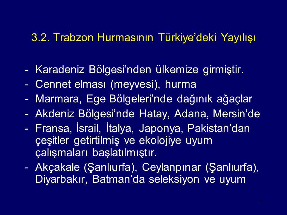 3.2. Trabzon Hurmasının Türkiye'deki Yayılışı