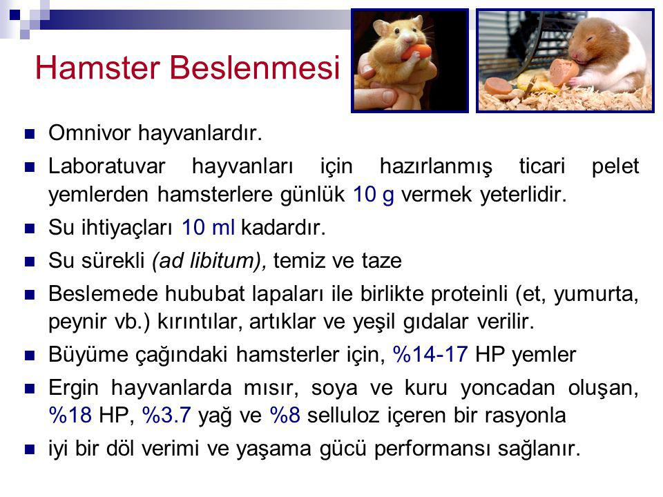 Hamster Beslenmesi Omnivor hayvanlardır.
