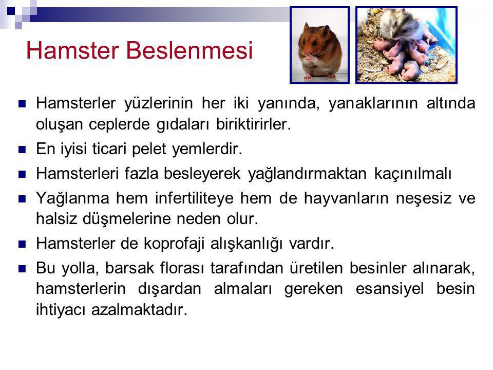 Hamster Beslenmesi Hamsterler yüzlerinin her iki yanında, yanaklarının altında oluşan ceplerde gıdaları biriktirirler.