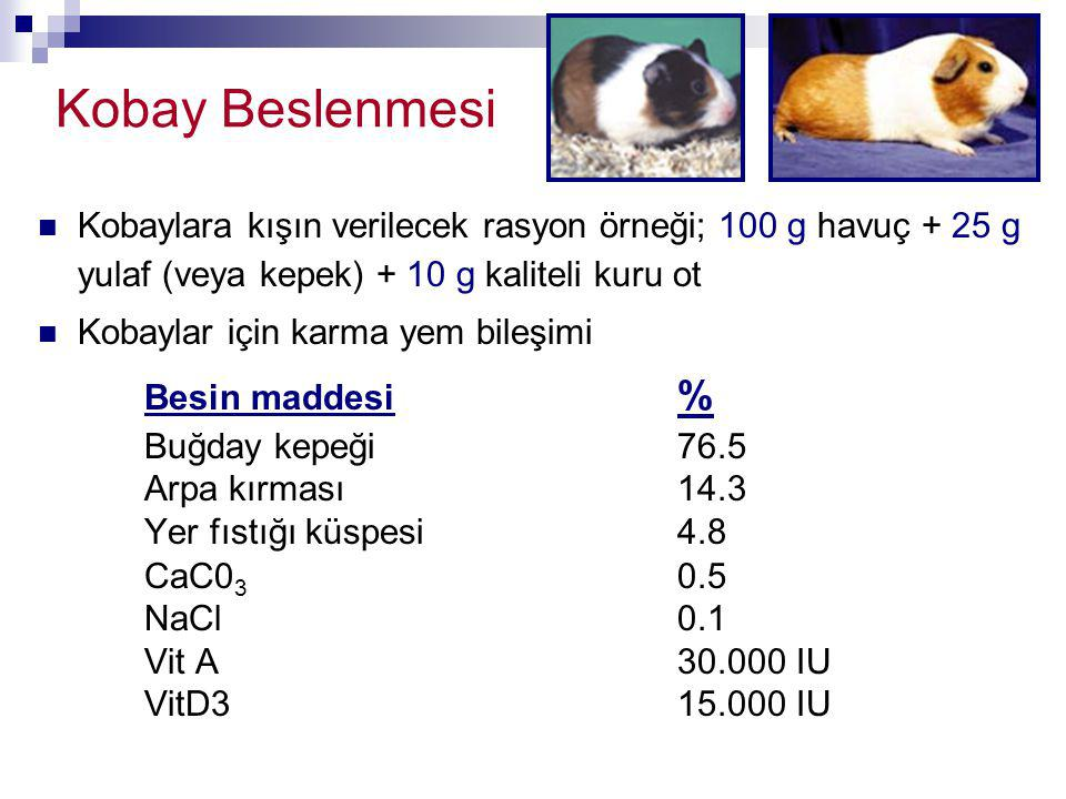 Kobay Beslenmesi Kobaylara kışın verilecek rasyon örneği; 100 g havuç + 25 g yulaf (veya kepek) + 10 g kaliteli kuru ot.