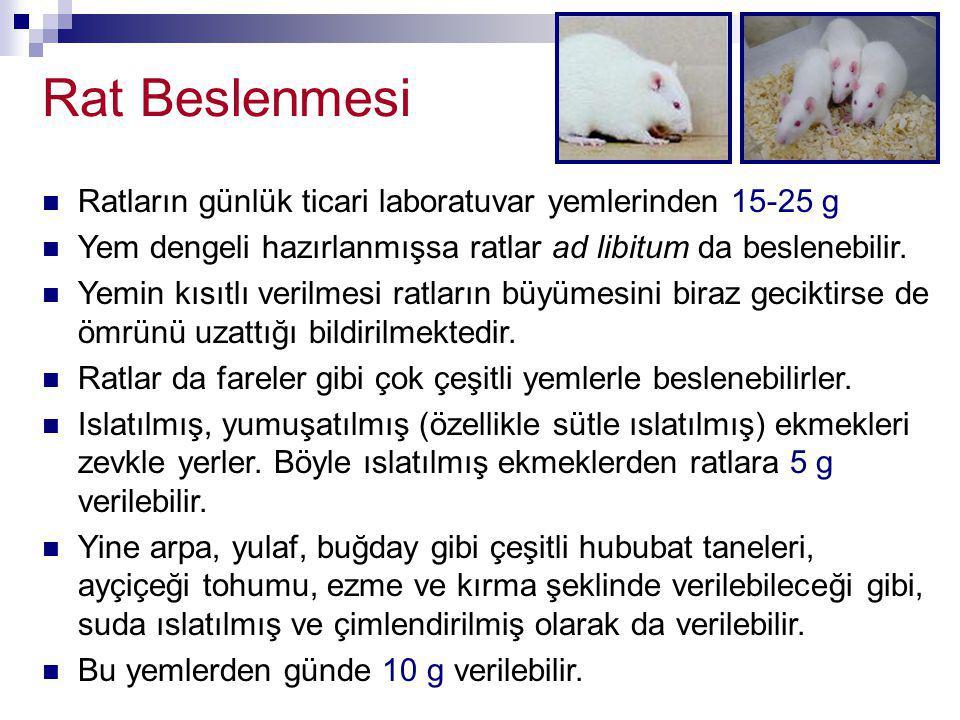 Rat Beslenmesi Ratların günlük ticari laboratuvar yemlerinden 15-25 g