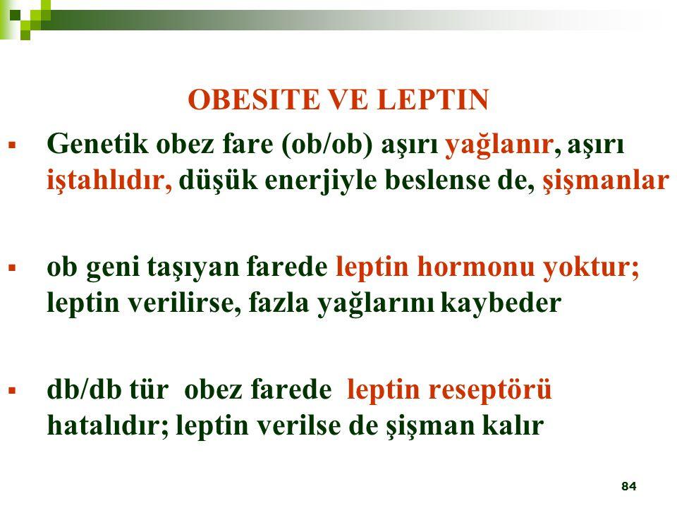 OBESITE VE LEPTIN Genetik obez fare (ob/ob) aşırı yağlanır, aşırı iştahlıdır, düşük enerjiyle beslense de, şişmanlar.