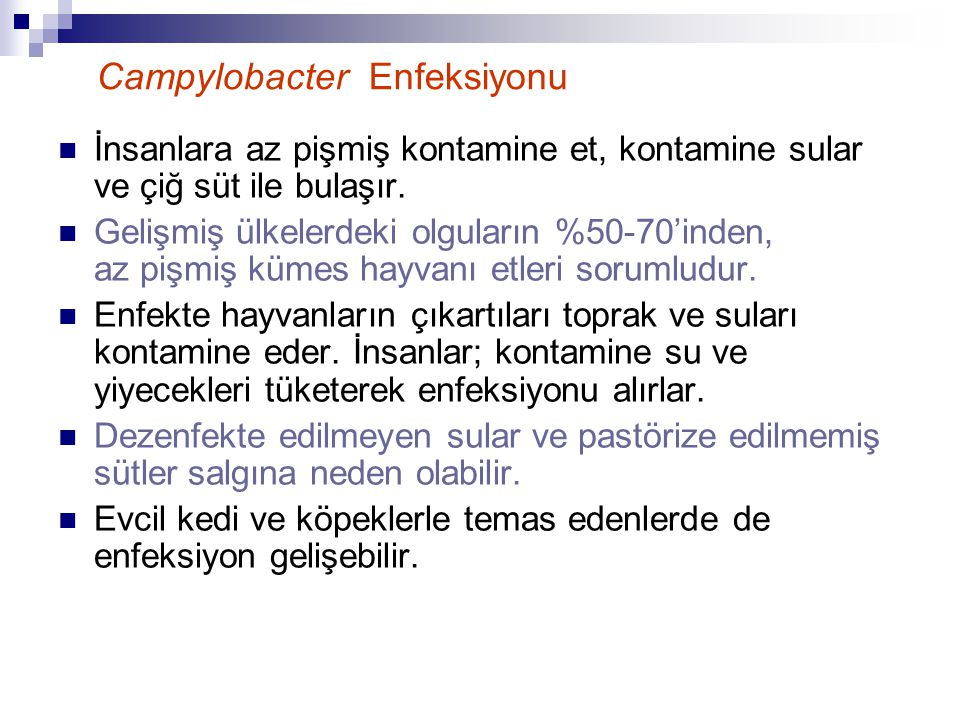 Campylobacter Enfeksiyonu