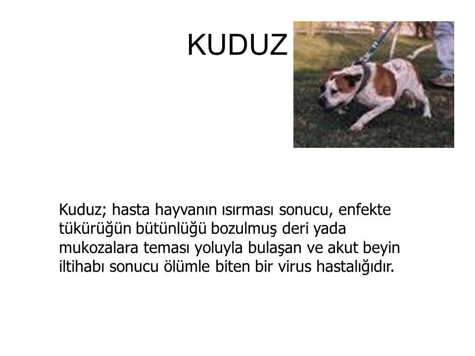 KUDUZ