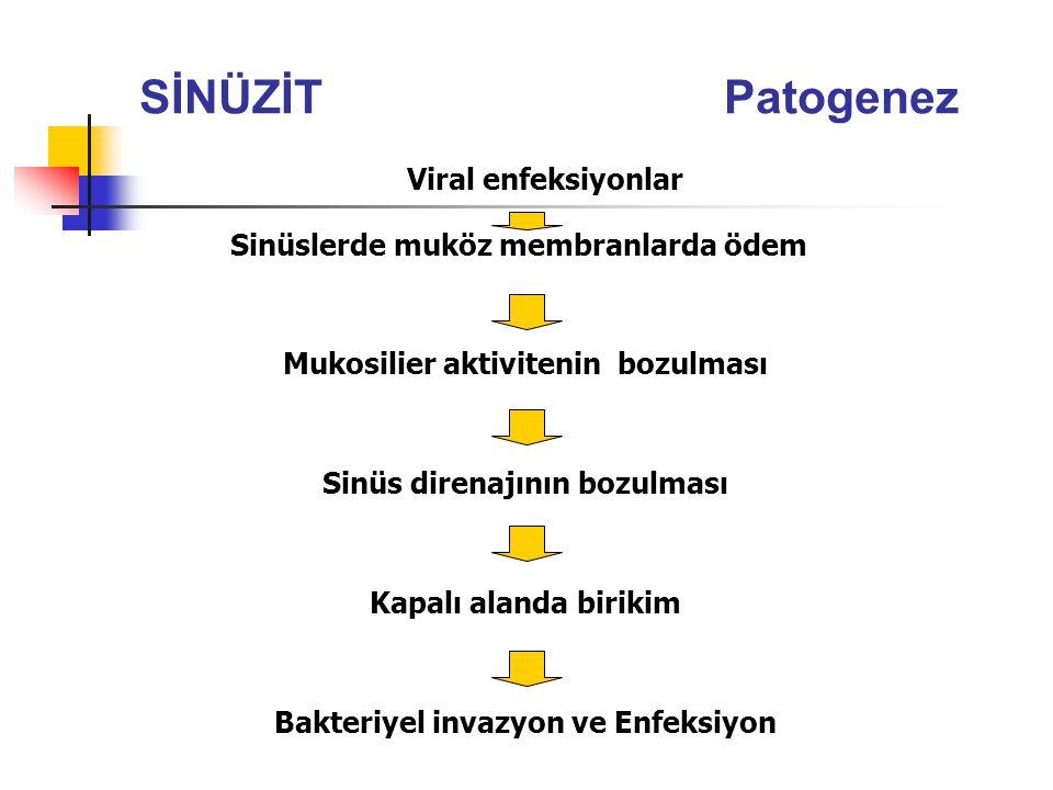 SİNÜZİT Patogenez Viral enfeksiyonlar