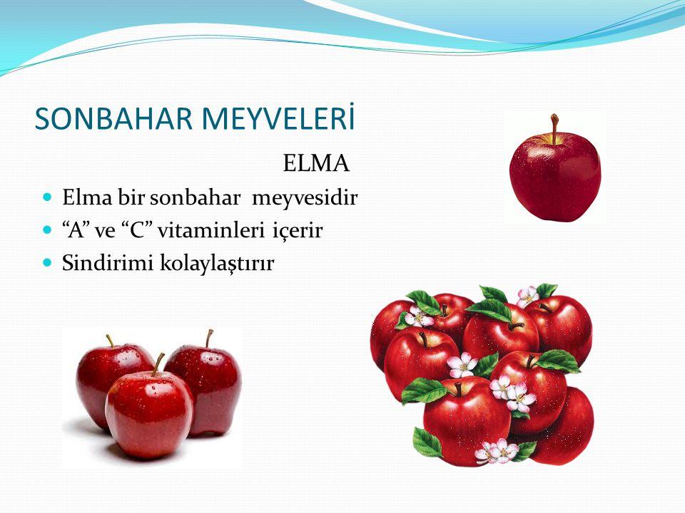SONBAHAR MEYVELERİ ELMA Elma bir sonbahar meyvesidir