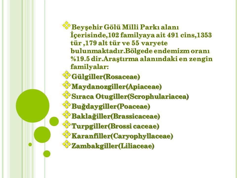 Beyşehir Gölü Milli Parkı alanı İçerisinde,102 familyaya ait 491 cins,1353 tür ,179 alt tür ve 55 varyete bulunmaktadır.Bölgede endemizm oranı %19.5 dir.Araştırma alanındaki en zengin familyalar: