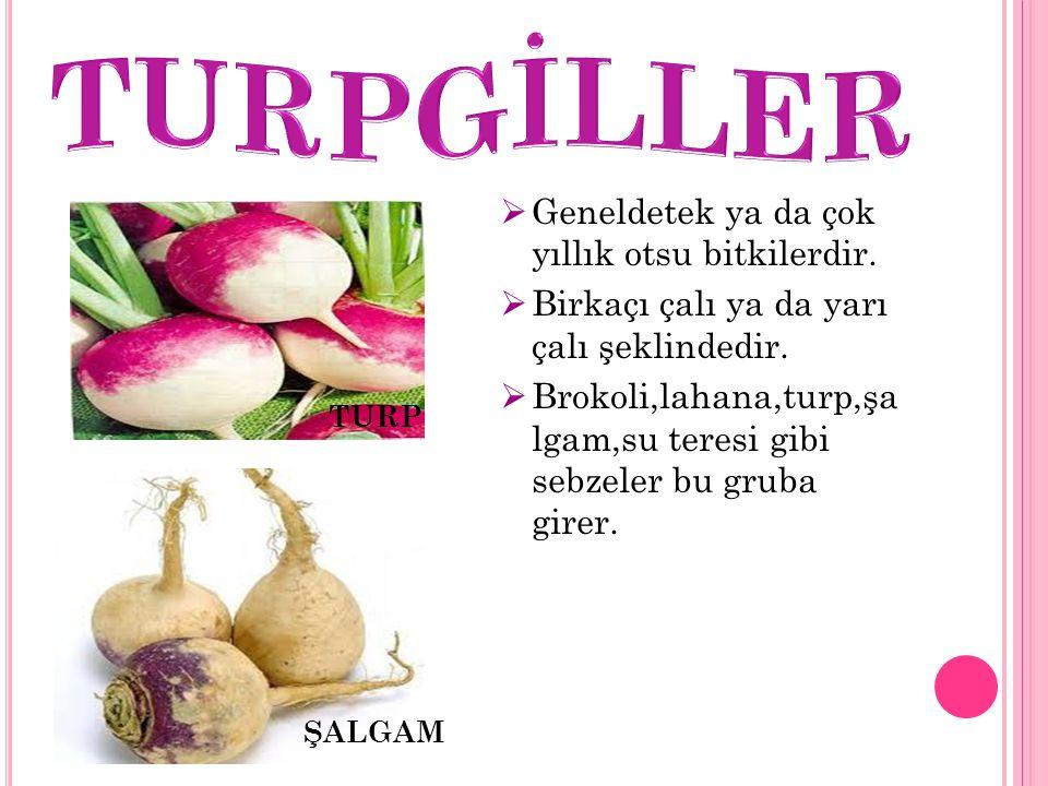 TURPGİLLER Geneldetek ya da çok yıllık otsu bitkilerdir.