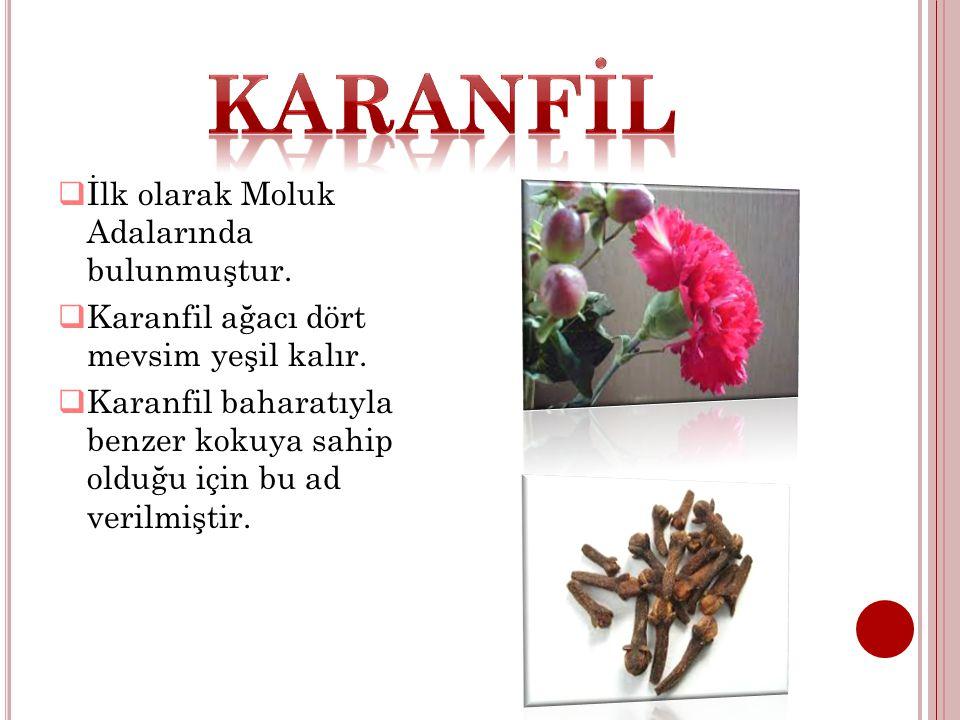 KARANFİL İlk olarak Moluk Adalarında bulunmuştur.