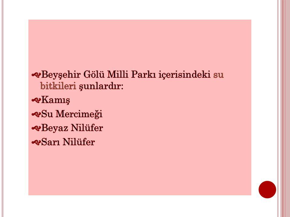 Beyşehir Gölü Milli Parkı içerisindeki su bitkileri şunlardır: