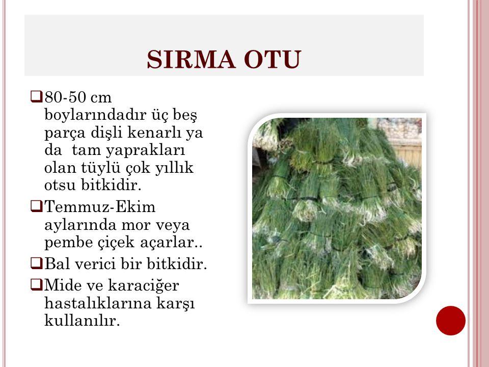 SIRMA OTU 80-50 cm boylarındadır üç beş parça dişli kenarlı ya da tam yaprakları olan tüylü çok yıllık otsu bitkidir.