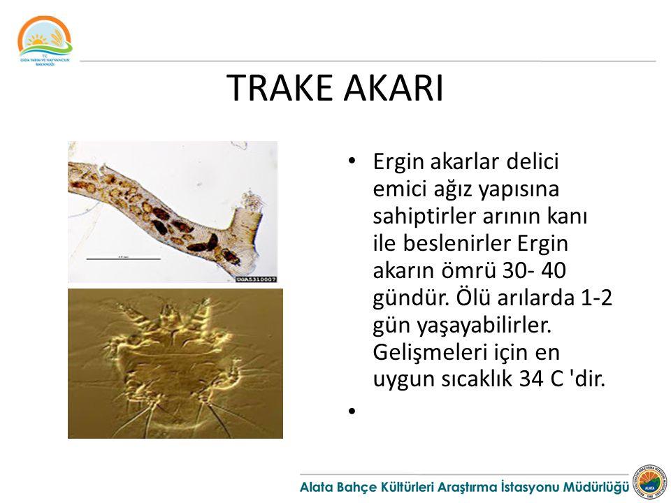 TRAKE AKARI